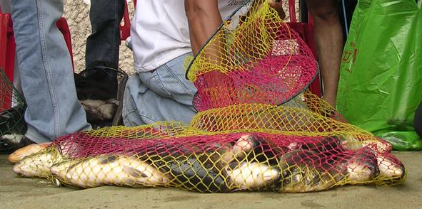 Umpan Ikan Mas 4