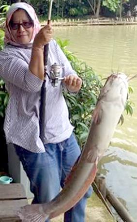Strike ikan lele jumbo di Godong Ijo