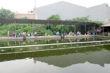 Mancing Ikan Mas Harian Air Hijau